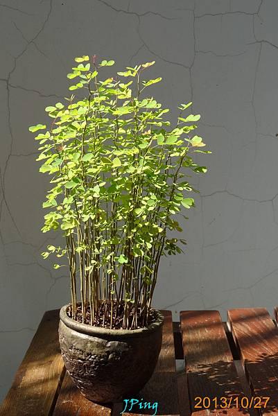 墨水樹 (9)