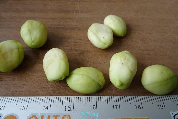 枇杷種子盆栽 (10)
