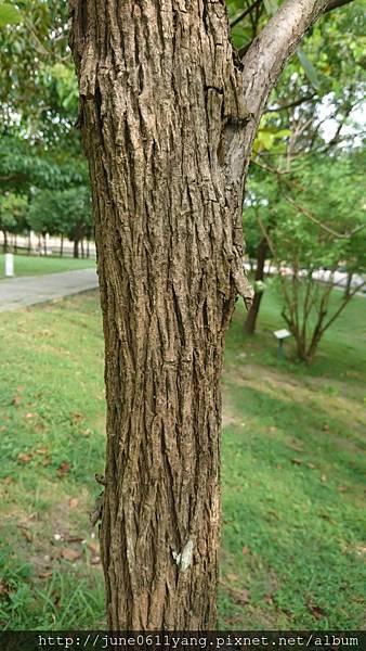 恆春厚殼樹 (45).jpg