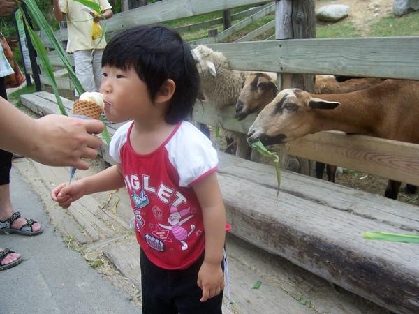 牛奶霜淇淋