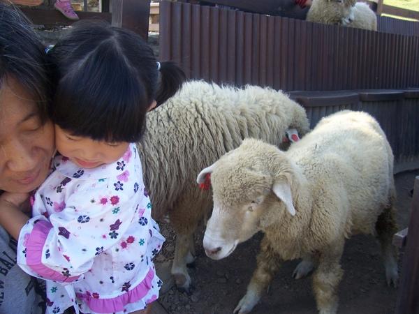 羊~還是怕怕.JPG