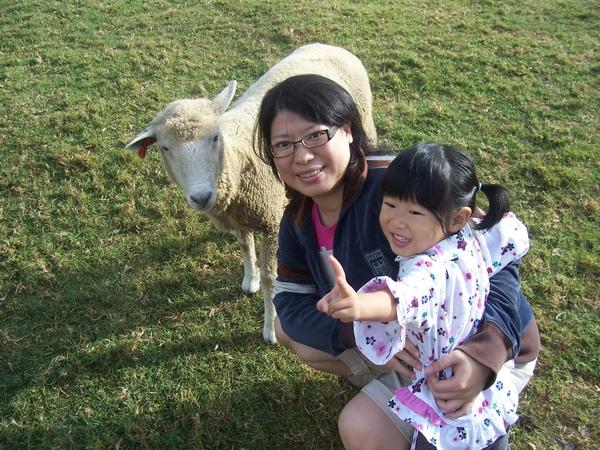 羊以為有東西吃.JPG