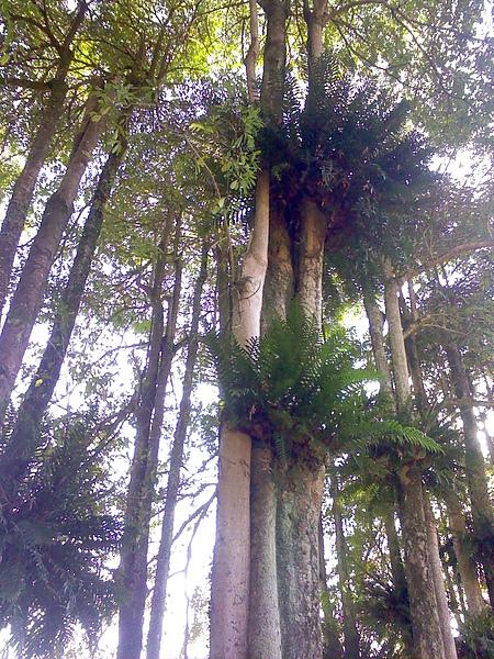 國小裡的樹