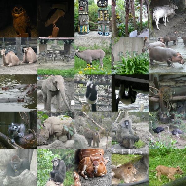 好多動物唷