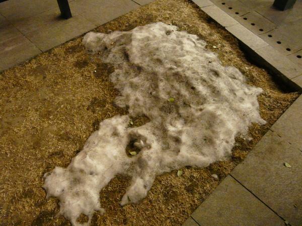 Day3_黑黑髒髒的雪..