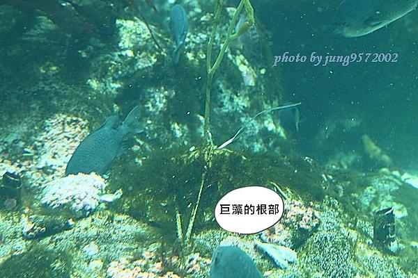 IMG_0733.JPG