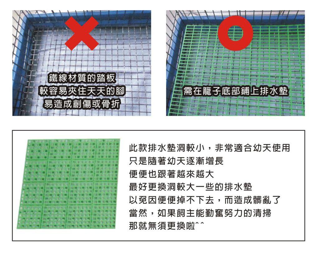 天竺鼠骨折-排水墊之應用