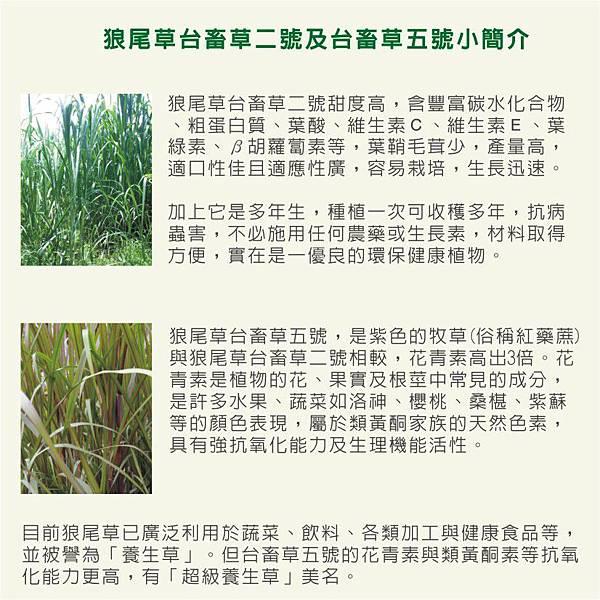 天竺鼠的飼養-狼尾草種植1