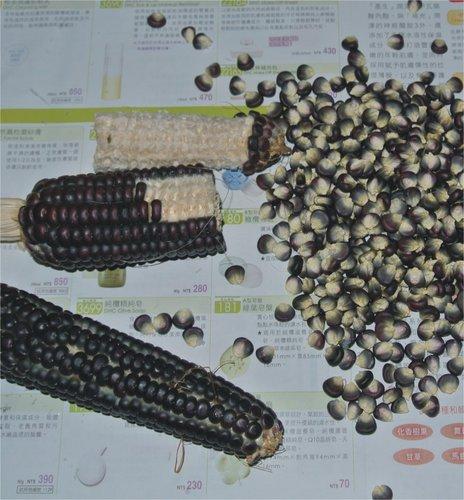 玉米葉-2