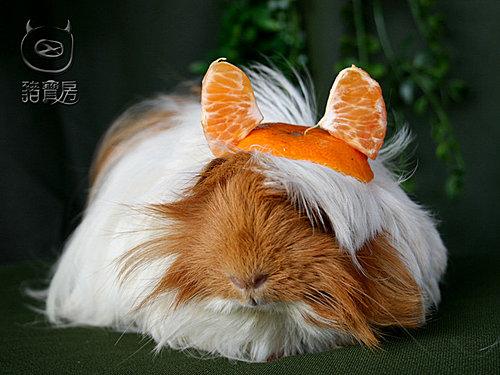 11橘子7