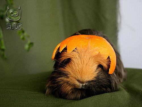 11橘子6
