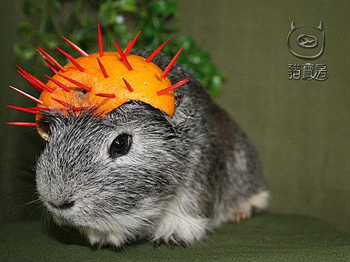 11橘子3