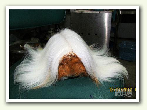 白髮魔女2