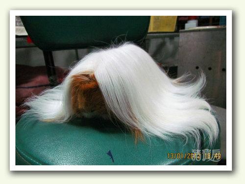 白髮魔女3