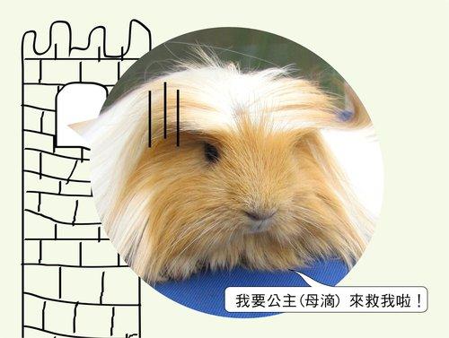 長髮王子3