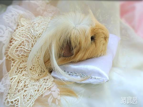 睡美豬-1