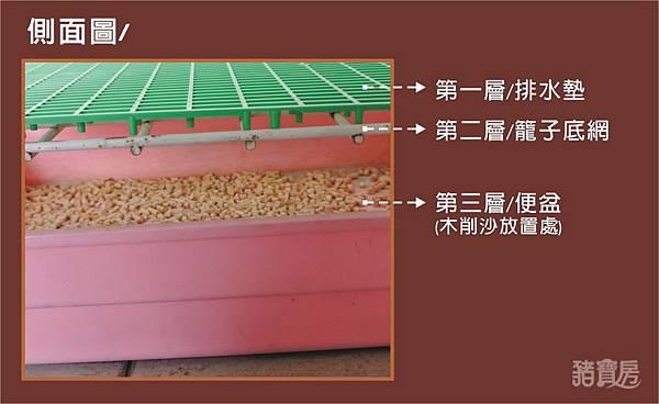 天竺鼠的飼養-木削沙2