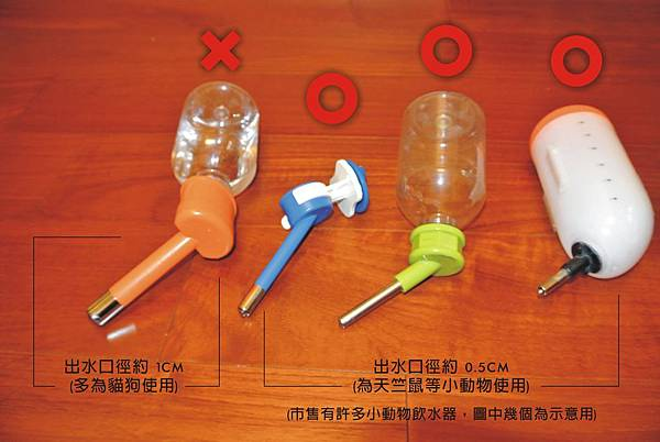 天竺鼠-飼養-飲水瓶