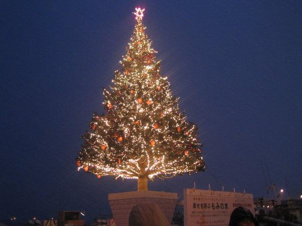 函館港邊金森倉庫的巨大聖誔樹