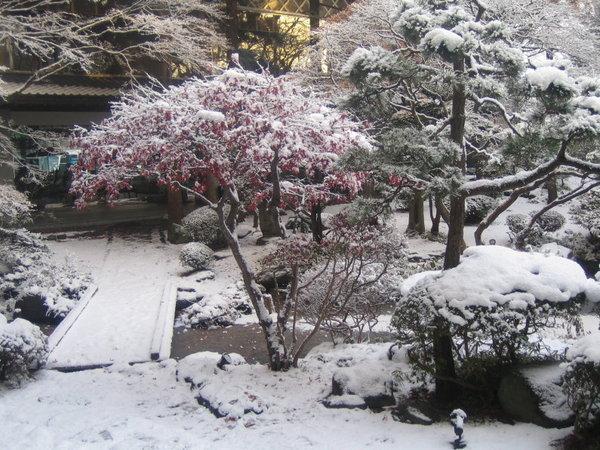 溫泉飯店中庭景色