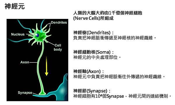 神經元.jpg