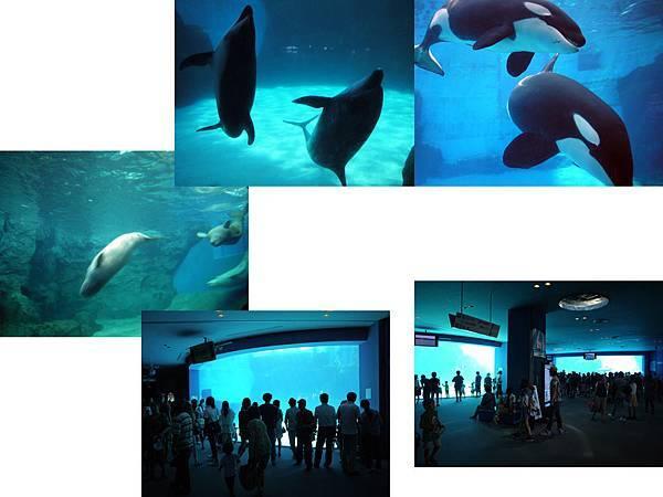 名古屋水族館1.jpg