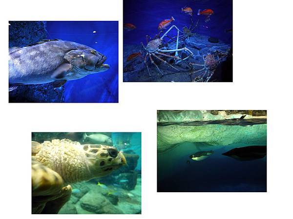 名古屋水族館5.jpg