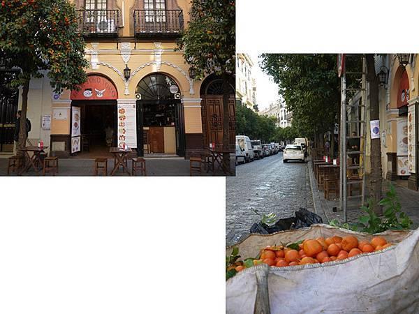 橘子採收.jpg