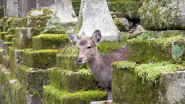 NARA_Deer2.jpg
