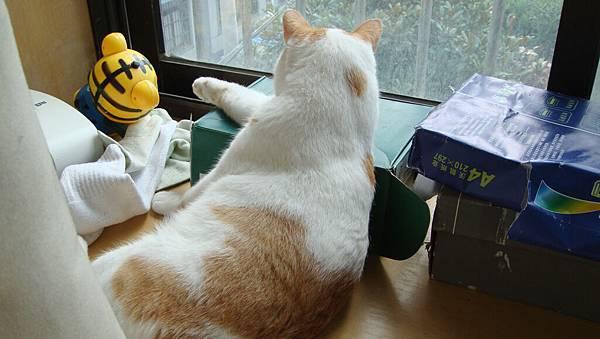 老闆,來個靠窗的位子!