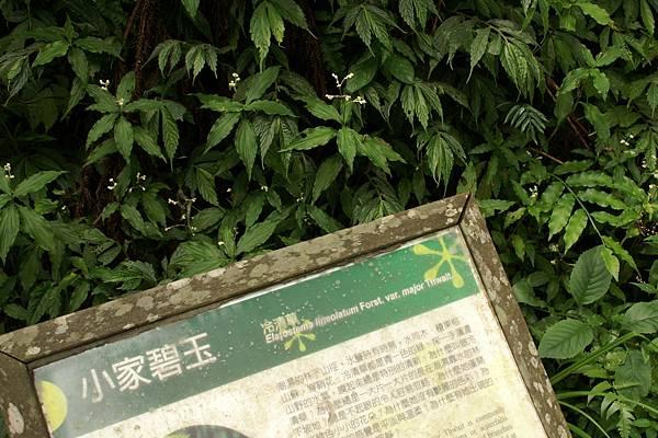 羅東松羅步道06.jpg