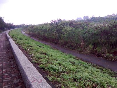 河堤邊的草叢