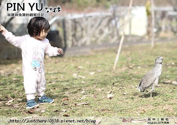 鼠寶與兔寶的觀察日記