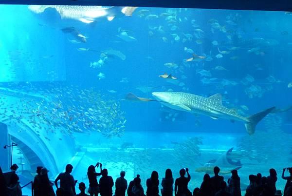 壯觀的水族館