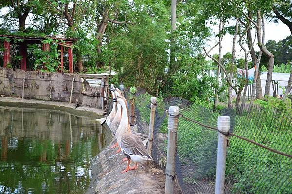 2012-0825-耀輝牧場-032.JPG