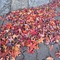 終於看到楓葉了....真的是名副其實的楓紅