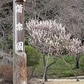 這裡就是偕樂園拉!聽說是日本三大名園之一(還是五大?忘了~)