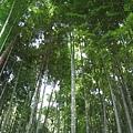 茂林...這種綠,真的漂亮...