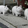 可愛小豬 單純可愛拍了下來