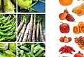 一般的蔬菜水果天然解酒藥