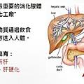 健安丰久仙 天然解酒藥、解宿醉、排毒、解毒、預防肝損傷