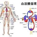 健安丰久仙 天然解酒藥 肝臟是我們身體的最大的解毒工廠