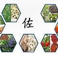 健安丰久仙(椇杞丹參片) 天然解酒藥 解酒、解宿醉佐藥使用方法
