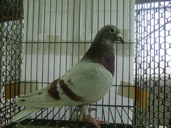 CIMG2887