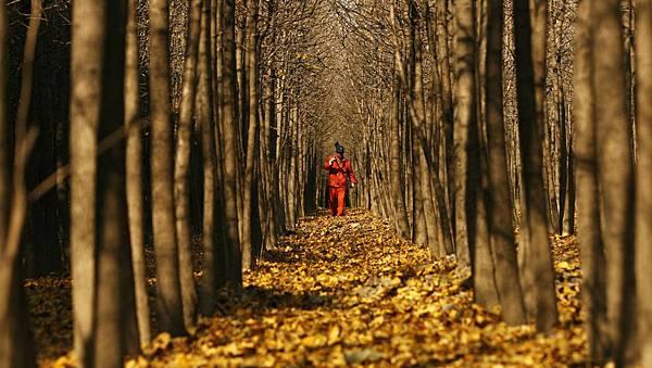 上海近郊人造林