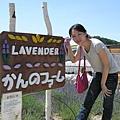 "Lavender--""薰衣草""之意"