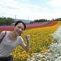 富田農場---彩虹花田