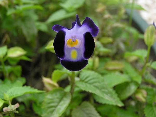 雖然深紫很高貴,但還是冏
