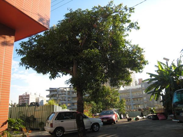 好大一棵樹~