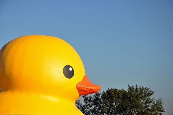 黃色小鴨 (25).jpg
